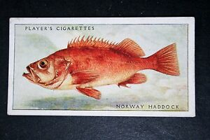 Norway Haddock   Sea Fish   Vintage Colour Card - Melbourne, Derbyshire, United Kingdom - Returns accepted Most purchases from business sellers are protected by the Consumer Contract Regulations 2013 which give you the right to cancel the purchase within 14 days after the day you receive the item. Find o - Melbourne, Derbyshire, United Kingdom