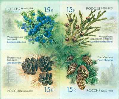 RUSSIA 2013, Flora of Russia. Cones of coniferous trees and shrubs MNH