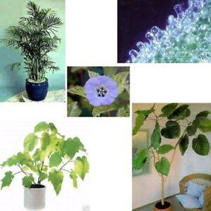 SUPER-Samenkauf-5-wahnsinnig-tolle-Zimmerpflanzen-im-Sparset