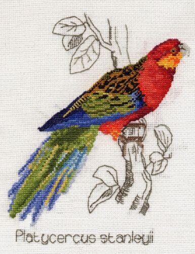 Stanleys Parakeet parrot counted cross stitch kit//chart 14s aida