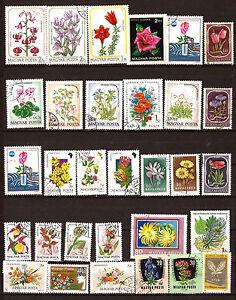 HUNGR-A-Flores-campos-prados-y-jardines-F319