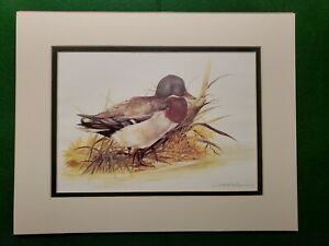Duck-Print-by-Joel-Kirk-Beautifully-Matted-Superb-Condition-Ready-to-Frame