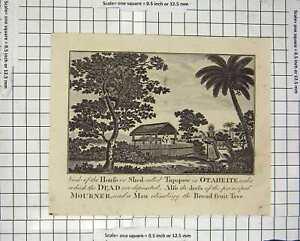 Original-Old-Antique-Print-C1800-House-Shed-Tupapow-Otaheite-Bread-Fruit-Tree