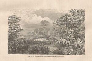 Industrieux A8905 Paesaggio Ideale Delle Terre Artiche Periodo Miocenico - 1895 Xilografia