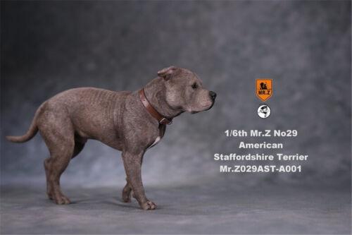 Mr.Z 1//6 American Staffordshire Terrier Dog Pet Figure Animal Decor Model Gift