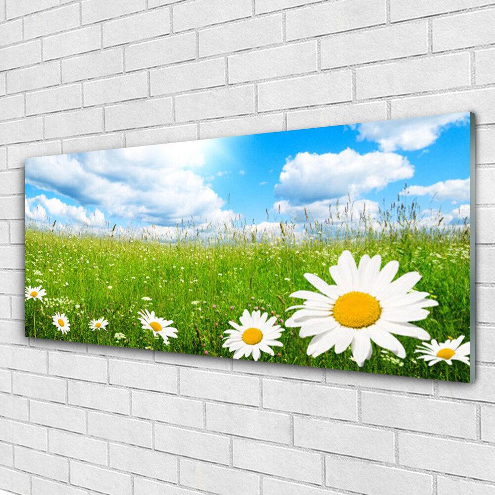 Acrylglasbilder Wandbilder aus Plexiglas® 125x50 Gänseblümchen Gras Natur