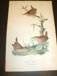 AUDUBON-039-S-BIRDS-of-AMERICA-1st-EDITION-WINTER-WREN-No-121