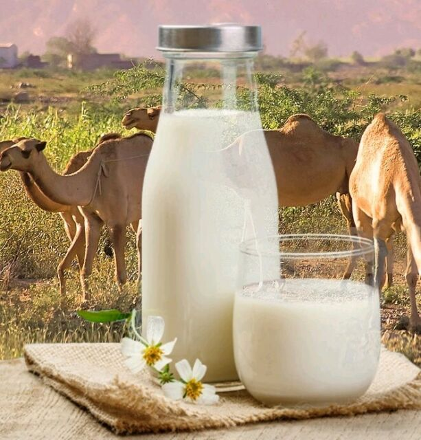 Image result for camel milk