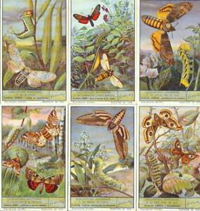 LIEBIG : S_1497 : 'Lépidoptères nocturnes