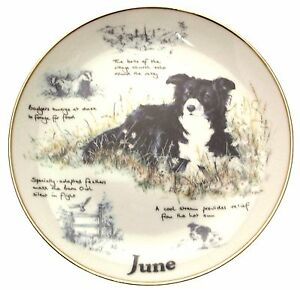 Danbury-Mint-Border-Collie-plate-June-Paul-Doyle-Dog-Plates-CP2169