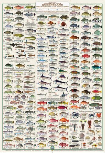 Fish Identification Fisherman/'s Guide QLD /& GBR WALL CHART LAMINATED
