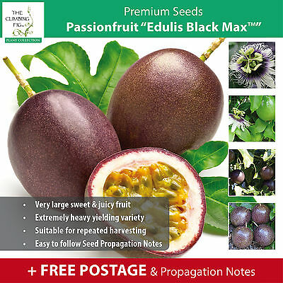 "PASSIONFRUIT ""Edulis Black Max™"" seeds. Heavy yielding sweet purple fruit."