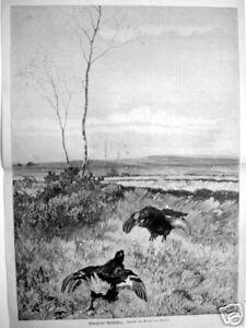 1890#kämpfende Birkhähne#guido Von Maffei#jagd#jäger Lange Lebensdauer Alte Berufe