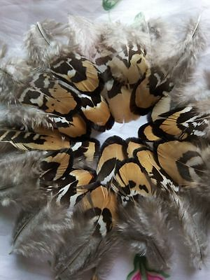 Beautiful 10/50pcs NATURAL Lady Amherst Pheasant neck feathers 6-8cm/3-3.5inch