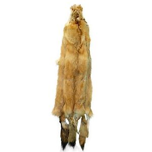ac145f59ddf Image is loading Glacier-Wear-Red-Fox-Colored-Coyote-Pelt-Hide-