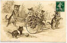Magnifiques chats humanisés . Katze . dressed Cats . Gato .