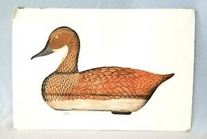 Vintage-Pintail-Hen-Decoy-Duck-Aquatint-Etching-Arthur-Nevin-Signed-amp-Numbered
