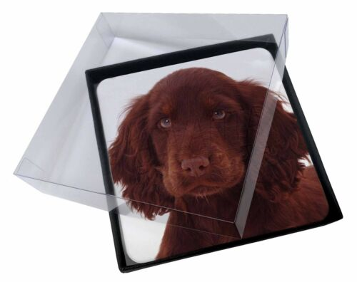 AD-SC27C 4x Chocolate Spaniel Puppy Picture Table Coasters Set in Gift Box