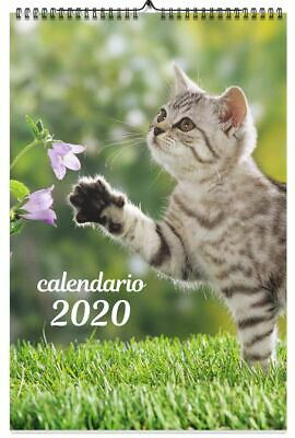 CALENDRIER MURAL AFFIXE CHATS 2020 CATS …