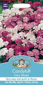 Monsieur Fothergills-paquet illustré-Fleur-Candytuft fée mixte 500 graines