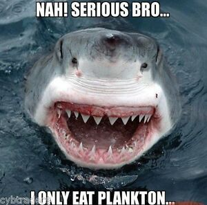 Image is loading Funny-Great-White-Shark-Refrigerator-Tool-Box-Magnet-