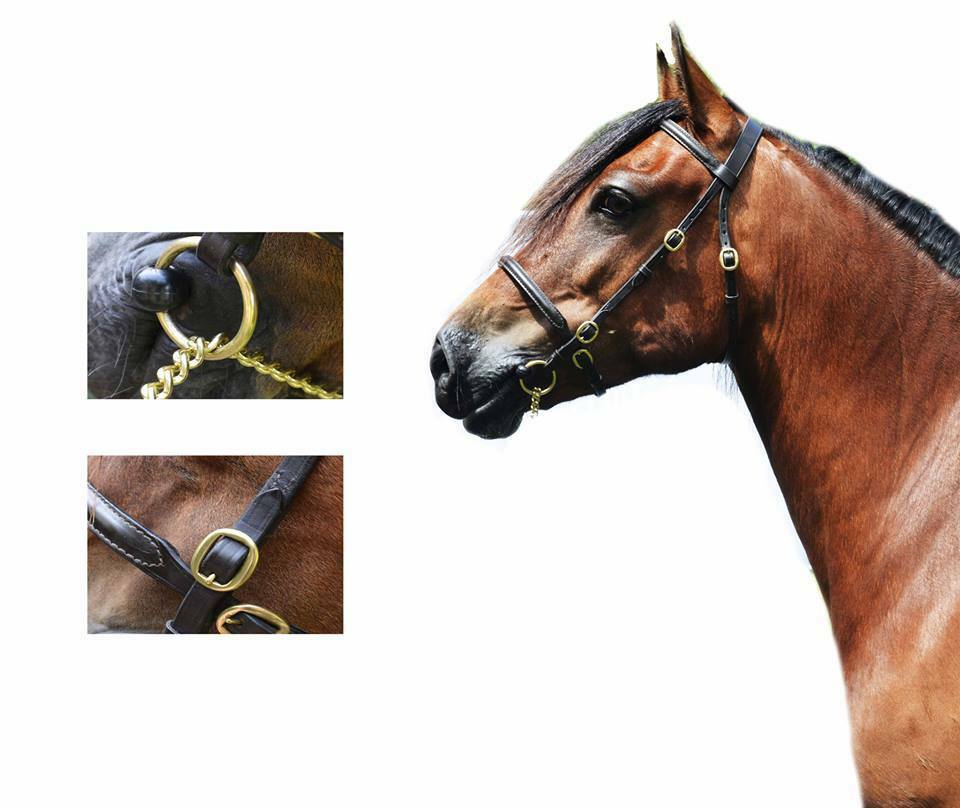 Quality Eng Leder InHand Show Bridle Welsh Pony Cob Mountain&Moorland Stallion