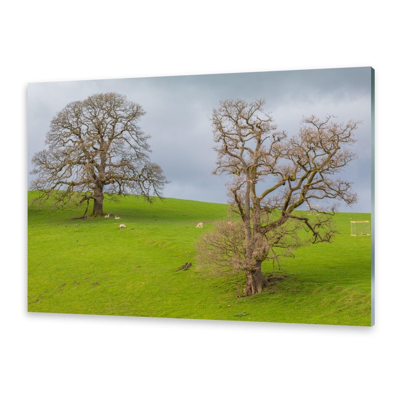 Acrylglasbilder Wandbild aus Plexiglas® Bild Hirsche