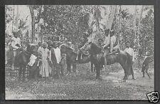 Gorontalo Natives Costume Horse Celebes Indonesia 1920