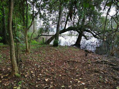 Terreno en VENTA Junto al lago Zirahuen