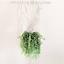 Macrame-Plant-Hanger-Willow-Handmade thumbnail 2