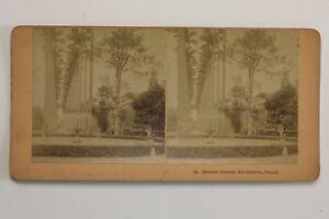 Giardino-Botanic-Rio-Da-Janeiro-Brasile-Foto-Stereo-N-Vintage-Albumina