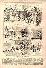 Scenes of Australian Life    -  1876