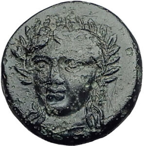 GRYNION-or-Gyrneion-Aeolis-306BC-Apollo-Shell-RARE-Ancient-Greek-Coin-i65176