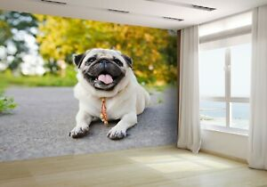 Little-Funny-Pug-Lying-in-Park-Wallpaper-Mural-Photo-48973525-budget-paper