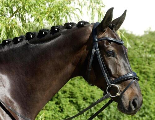 Mähnen Twister 12 Stück BUSSE Mähnenschmuck fürs Pferd Mähnengummis pferdo24