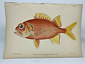 Antique-Lithographic-Print-Reef-Fishes-Hawaiian-Islands-Bien-1903-Plate-6