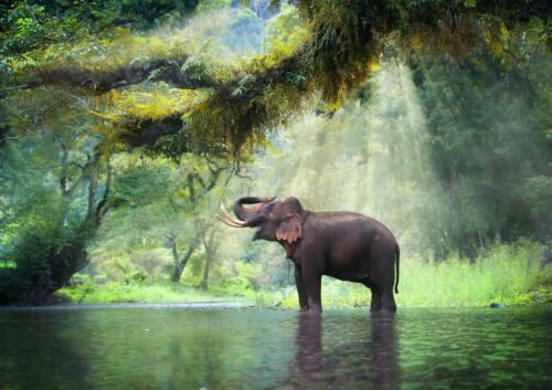 A4 Jungle Elephant Poster Print Size A4 Forest Wild Animal Poster Gift #14847
