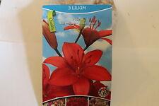 3 Blumenzwiebeln,Lilie,Asia rot#BZ19