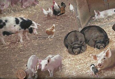 Barnyard Babies farm animals cows pigs ducks stripe Spectrix  fabric