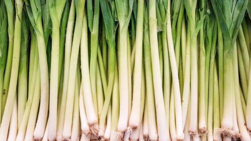 Leek Chinese Green Vegetable Natural Organic Food 100 Pcs Home Garden Yard