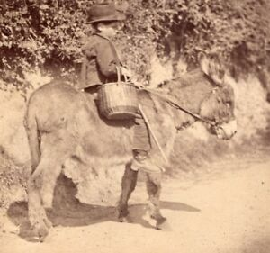Nice-Study-of-Boy-on-Donkey-France-old-Photo-1870