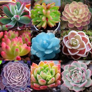 Pote De Sementes De Plantas Suculentas Flores Exoticas De Protecao