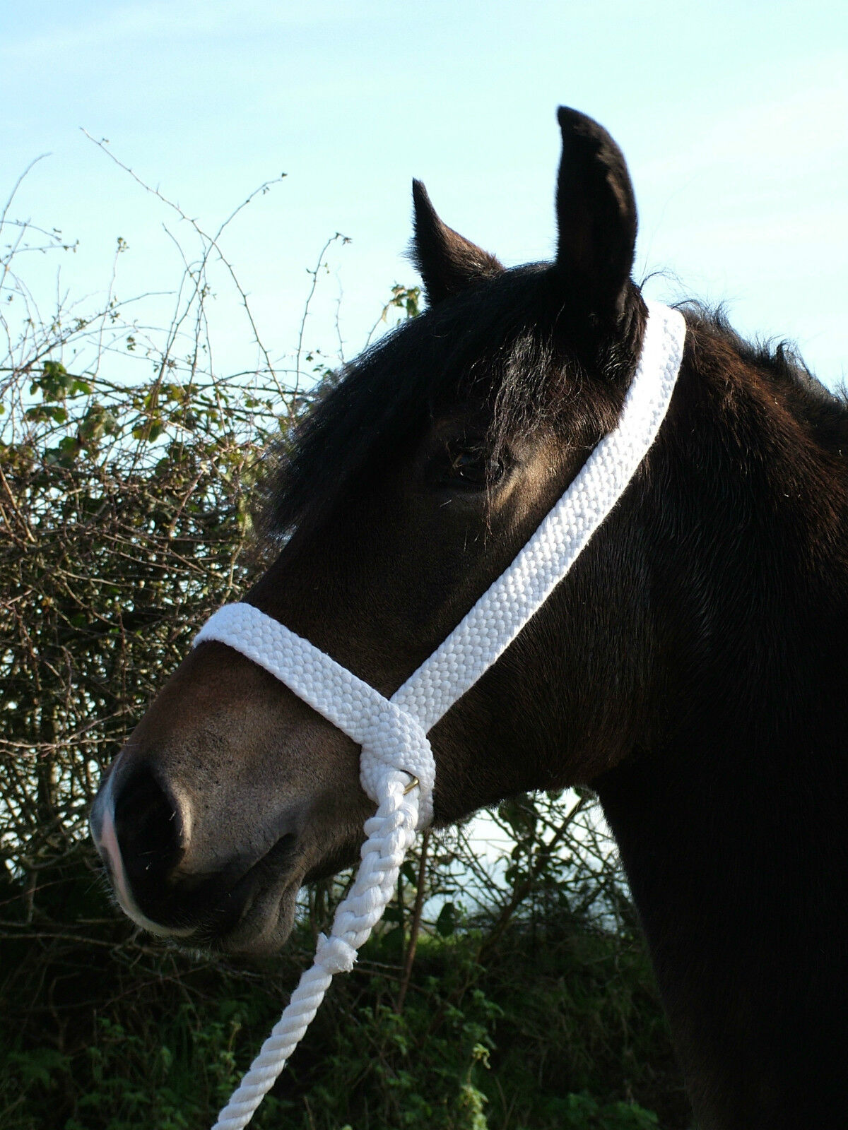 Plaited show  halter white cotton welsh, natives, traditional PLAS EQUESTRIAN  order now lowest prices