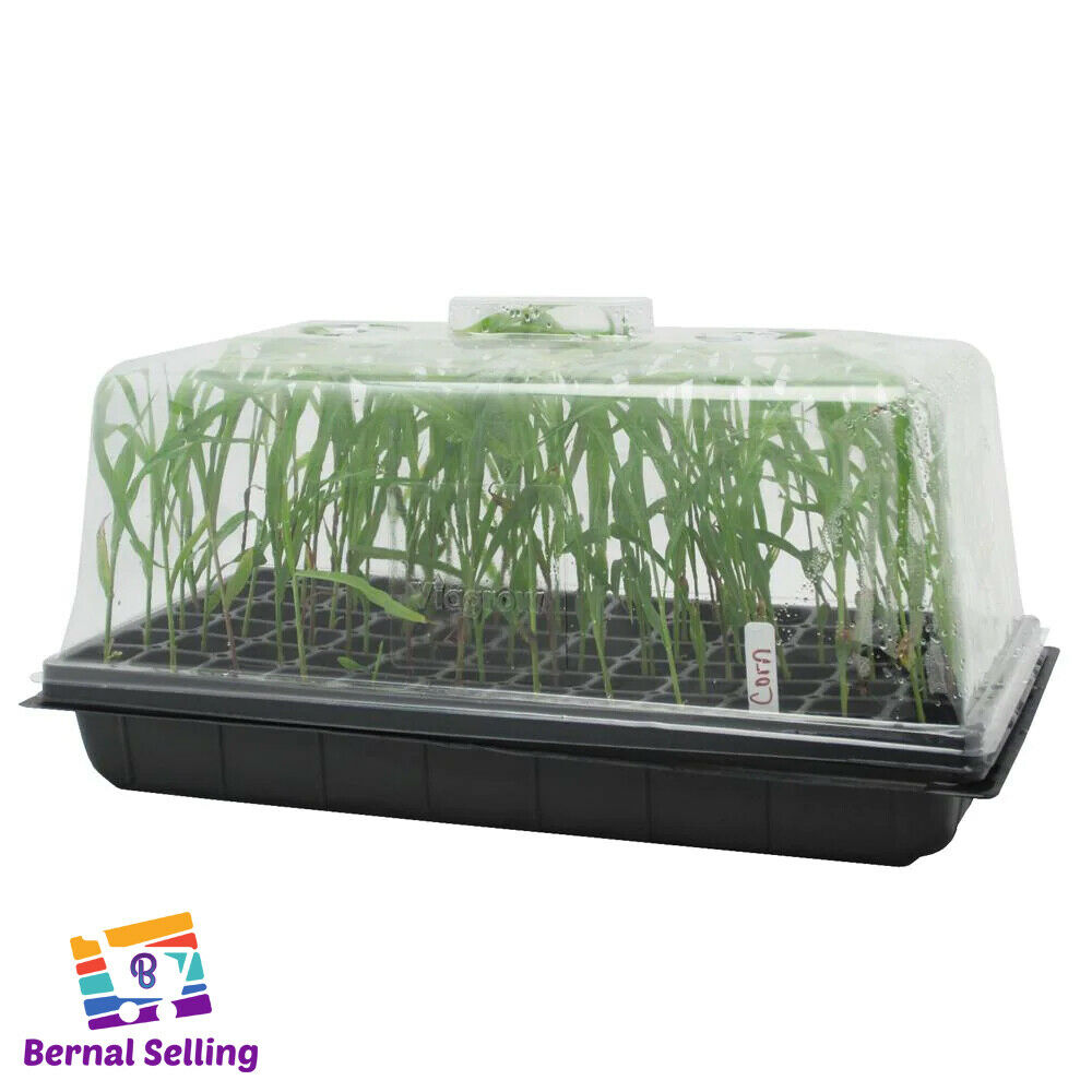 10 In. X 20 In. Propagation Kit with Tall 7 In. Dome