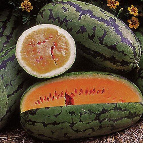 Heirloom Orange Flesh Melon Garden Seeds Orangeglo Watermelon Seed 1g to 10g