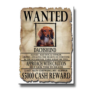 DACHSHUND-Wanted-Poster-FRIDGE-MAGNET-No-4-Doxie-DOG