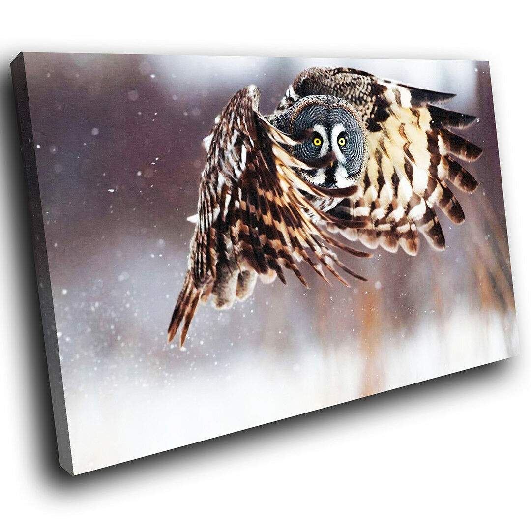 A060 braun Owl Weiß Snow Cool Funky Animal Canvas Wall Art Large Picture Prints