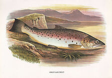 VINTAGE FACSIMILE FISH PRINT ~ GREAT LAKE TROUT ~ A. F. LYDON