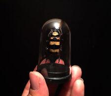 Cabinet de curiosités Entomologie Globe Cerambycidae Nemophas tricolor