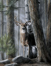Solitary Buck by Kevin Daniel Art Print Wildlife Deer Poster 13x19